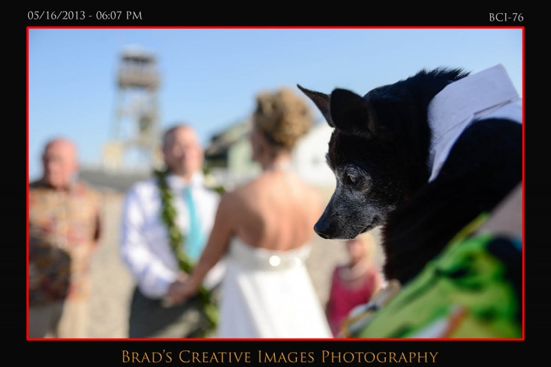 Florida Beach Wedding Images